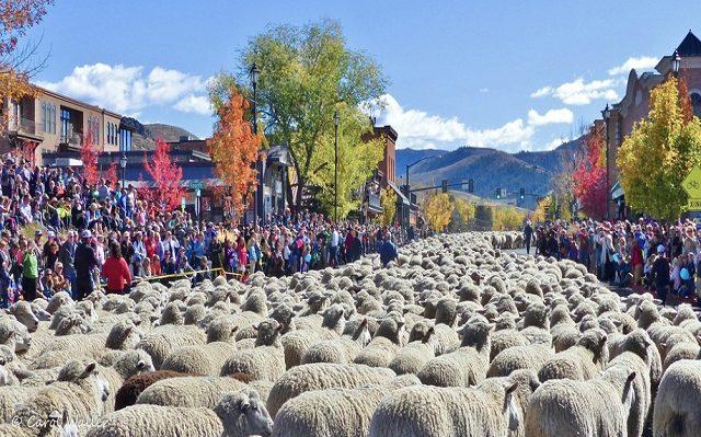 Những lễ hội độc đáo ở Mỹ - diễu hành cừu