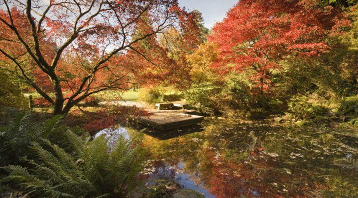 Vườn bách ithaor New York