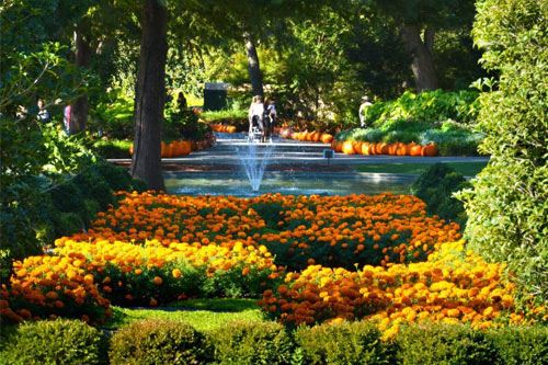 Vườn đỗ quyên Asticou