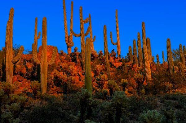 Công viên quốc gia Saguaro, Mỹ